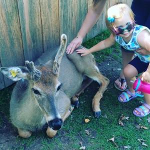 """""""I pet deer"""""""